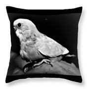 Greyscale Parraket Baby Sitting On Hand Throw Pillow