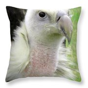 Griffins Vulture Eye To Eye Throw Pillow