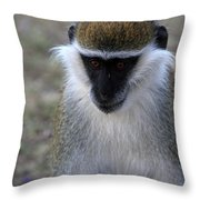 Grivet Monkey Throw Pillow