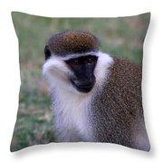 Grivet Monkey Ethiopia Throw Pillow