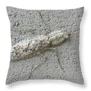 Grizzled Mantis  Throw Pillow