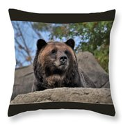Grizzly Bear 1 Throw Pillow