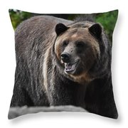 Grizzly Bear 3 Throw Pillow