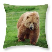 Grizzly Bear Approaching In A Field Throw Pillow
