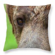 Grizzly Bear Arctos Ursus Throw Pillow