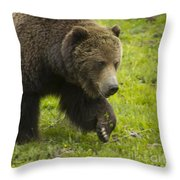 Grizzly Bear Boar-signed-#8517 Throw Pillow