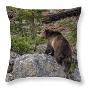 Grizzly Sow In Yellowstone Park Throw Pillow