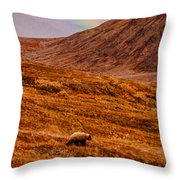 Grizzly Under The Rainbow Throw Pillow