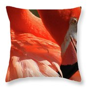 Grooming Throw Pillow