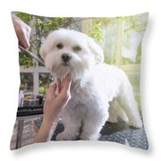 Grooming The Neck Of Adorable White Dog Throw Pillow
