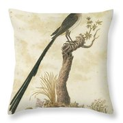 Grote Kaapse Suikervogel Throw Pillow