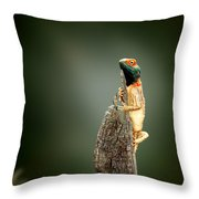 Ground Agama Sunbathing Throw Pillow