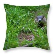 Groundhog Home Defense 2017 28 Throw Pillow