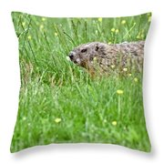 Groundhog In A Field Of Flowers Throw Pillow