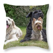 Group Of Three Dogs Throw Pillow