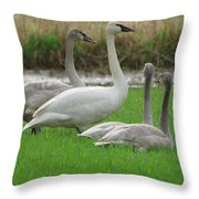 Group Of Young Swans Throw Pillow