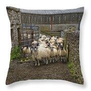 Group Yorkshire Sheep Throw Pillow
