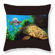Grouper In Wreck Throw Pillow