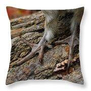 Grouse Feet Throw Pillow