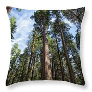 Grove Of Big Trees Throw Pillow