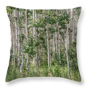 Grove Of Quaking Aspen Aka Quakies Throw Pillow