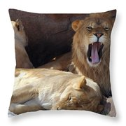 Growling Male Lion In Den With Two Females Throw Pillow