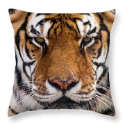 Hunter's Displeasure Throw Pillow