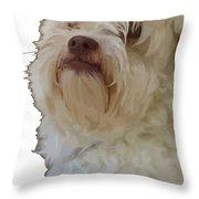 Grumpy Terrier Dog Face Throw Pillow