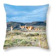 Guanaco In Patagonia Throw Pillow