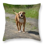 Guarding Pit Bull Dog Throw Pillow