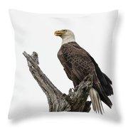 Guarding The Nest Throw Pillow