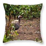 Guinea Fowl 1 Throw Pillow