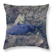 Guineafowl Pufferfish Throw Pillow