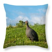 Guineafowl Searching Throw Pillow
