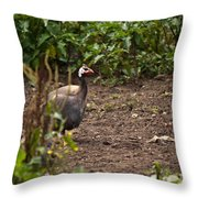 Guineahen Looking For Food Throw Pillow