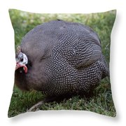 Guinnea Fowl On The Run Throw Pillow