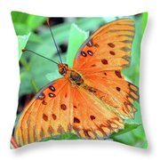 Gulf Fritillary Butterfly Cropped Throw Pillow