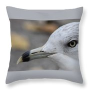 Gull Eye Throw Pillow