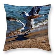 Gull Fight Throw Pillow by Amanda Struz