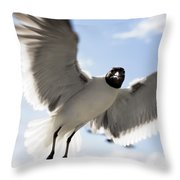 Gull In Flight Throw Pillow