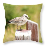 Gull On A Post Throw Pillow