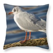 Gull On A Rope Throw Pillow