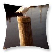 Gull Warning Throw Pillow