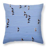 Gulls And Reflections Dot The Water Throw Pillow