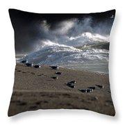 Gulls At Goat Rock Sundown Throw Pillow