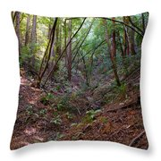 Gully On Mt Tamalpais #2 Throw Pillow by Ben Upham III