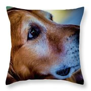 Gus As Photo Assistant 3504 Throw Pillow