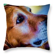 Gus As Photo Assistant 3504t2 Throw Pillow