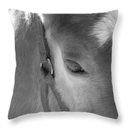 Haflinger Colt Throw Pillow
