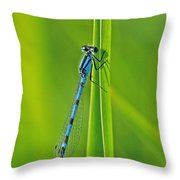 Hagens Bluet Throw Pillow